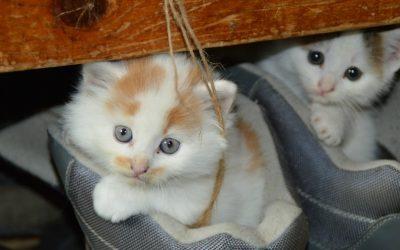回報基督:貓咪的比喻