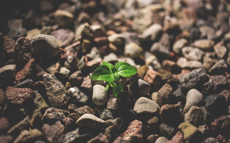 建立對基督的希望