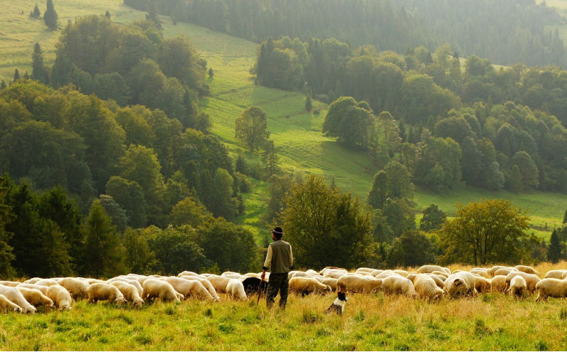 尋找迷失的羊