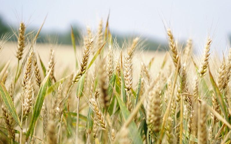 在麥子和稗子的比喻中,我們忽略了什麼?